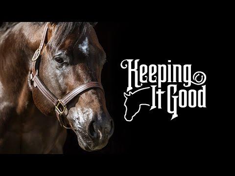 Keeping It Good: 2008 AQHA Bay Stallion