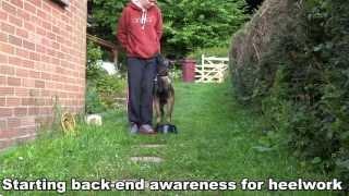 Havok - 5 Mnth Old Belgian Malinois - Basic Obedience Training / Schutzhund