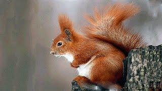 Красивые и умные животные леса.Beautiful and intelligent animals of the forest