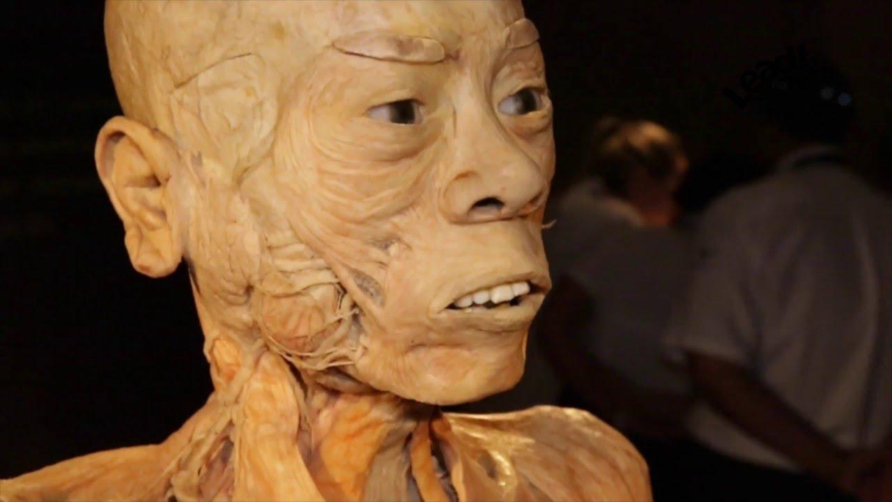Anotomia humana