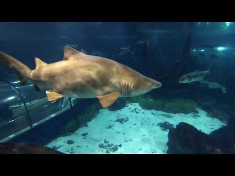 Aquarium Barcelona II
