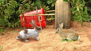 Amazing Quick Rabbit Trap Using Car Tire And Basket - How To Make Rabbit Trap & Car Tire Work 100%