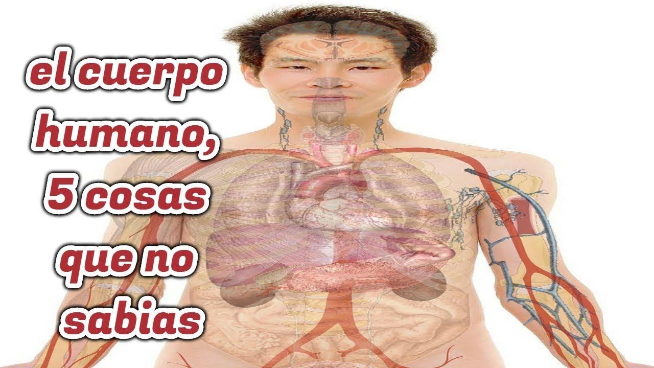 el cuerpo humano por dentro I 5 cosas que no sabias del cuerpo ...