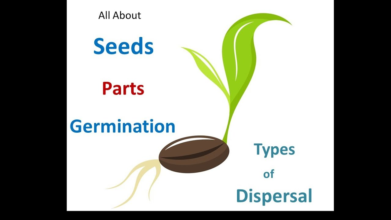 Seed parts Seed germination process Seed dispersal methods for – Seed Dispersal Worksheet