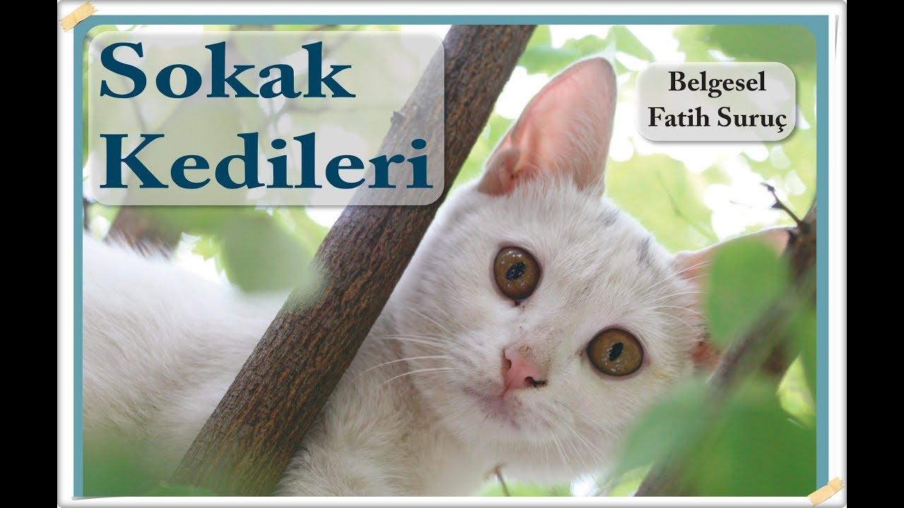 Sokak Kedileri (Belgesel) Yönetmen: Fatih Suruç