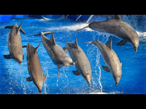 Best Dolphin Show