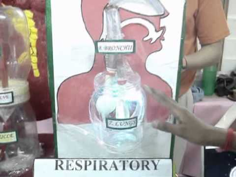 Simple Diagram Of Human Lungs Working Model On Heart Lungs And Kidney 2012 Mpg Youtube