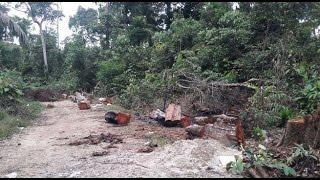 Madre de Dios: decenas de muertes en campo de exterminio thumbnail