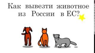 Инструкция: Как вывезти животное в ЕС