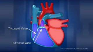 How the Heart Works thumbnail