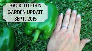 Back to Eden Garden Update - September 2015
