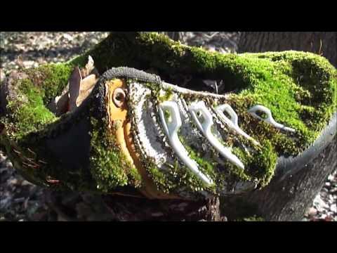 Первоцвет (трава) – полезные свойства и применение