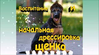 Начало дрессировки щенка ч.1, с чего начать дрессировку щенка, дрессировка щенка видео