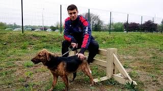 Акция «БГ» в помощь бездомным животным. Петар Джорджич