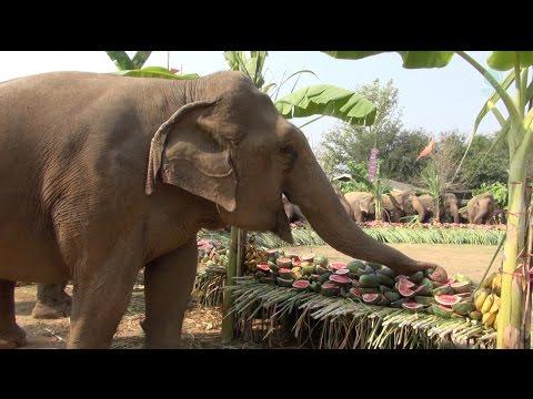 Elephant Buffet For Thailand's Elephant Day