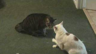 The Best Cat Fight EVER On You Tube!  RE: EXTREME CAT FIGHT