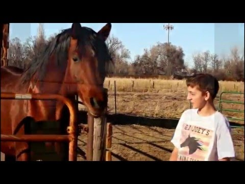 The Colorado Therapy Horses,  - Indy the Talking Horse