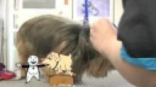 Yorkshire Terrier Yorkie Grooming Dvd Video Yorkshire Terrie