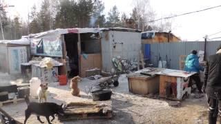 Сгорел приют для собак в Челябинске