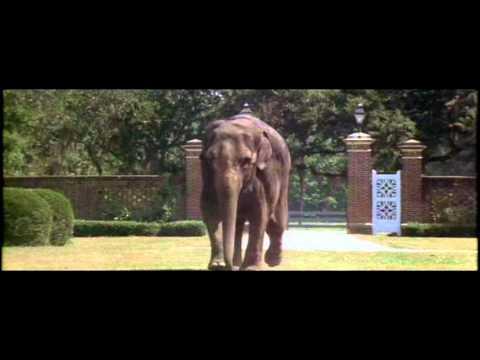 ace ventura when nature calls elefant scene youtube