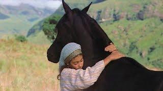 一匹桀骜不驯的黑马,是沙漠里的传说,却被一个小女孩训服