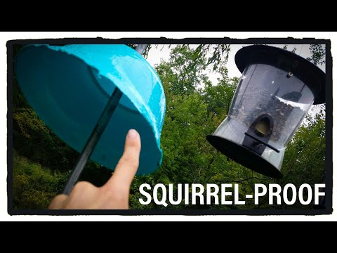 3 Tricks For A SQUIRREL PROOF Bird Feeder