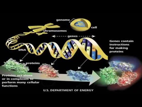 Genetic Engineering Techniques and Uses