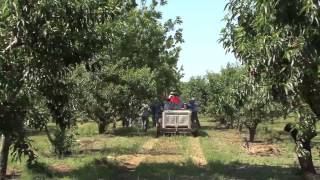 Get To Know Georgia Peach Farmer Duke Lane