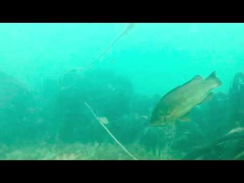 Scuba Diving In Beer East Devon 2018