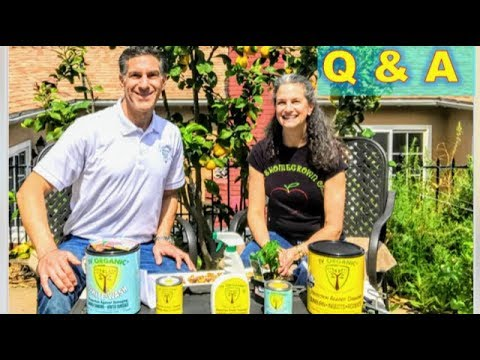 10 Q&A with JudysHomeGrown.com  | PLANTING TO LUNAR CYCLE | FAVORITE FRUITS & VEGGIES | G.M.O. ...