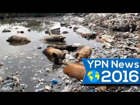 YPN News 07-23-2016