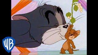 Tom & Jerry | The Tom & Jerry Kiss | Classic Cartoon | WB Kids