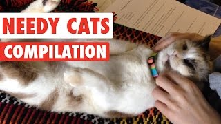 Needy Cats Video Compilation 2016