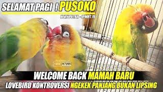 SELAMAT PAGI ! LOVEBIRD PUSOKO   WELCOME BACK MAMAH BARU   KONSLET NGEKEK PANJANG BUKAN LIPSING