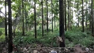 Peluang usaha masa depan / Investasi dengan pohon jati