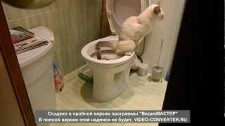 "наша кошка в туалете по ""маленькому"""