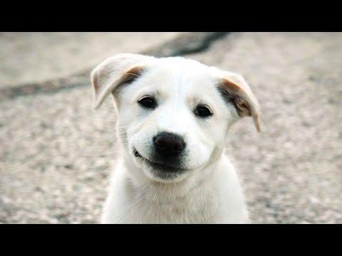 Смотреть видео про собак, самое интересное и смешное
