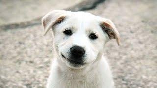Трогательное видео про собак