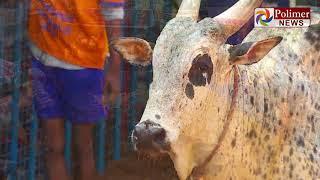 ஜல்லிக்கட்டு வீரர்களை மிரள வைத்த சீமராஜா...| Avaniyapuram |Jallikattu 2020