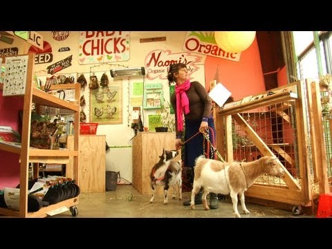 Expert Advice For Raising Goats in the City