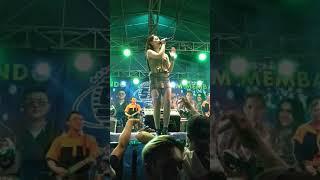 Download Vita alvia live pameran sesetan