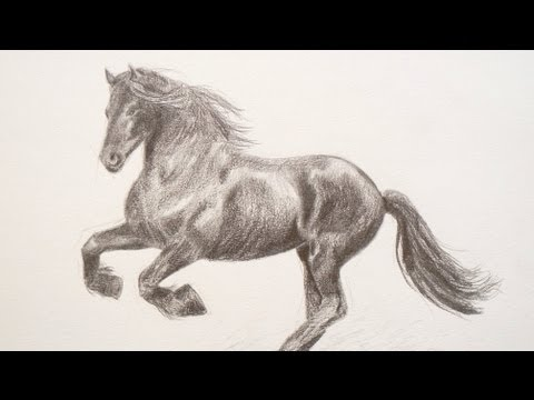 Learning To Draw How To Draw Horse
