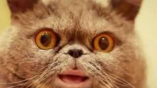 Поющий кот Сальвадор 12(, 2012-11-17T15:04:57.000Z)