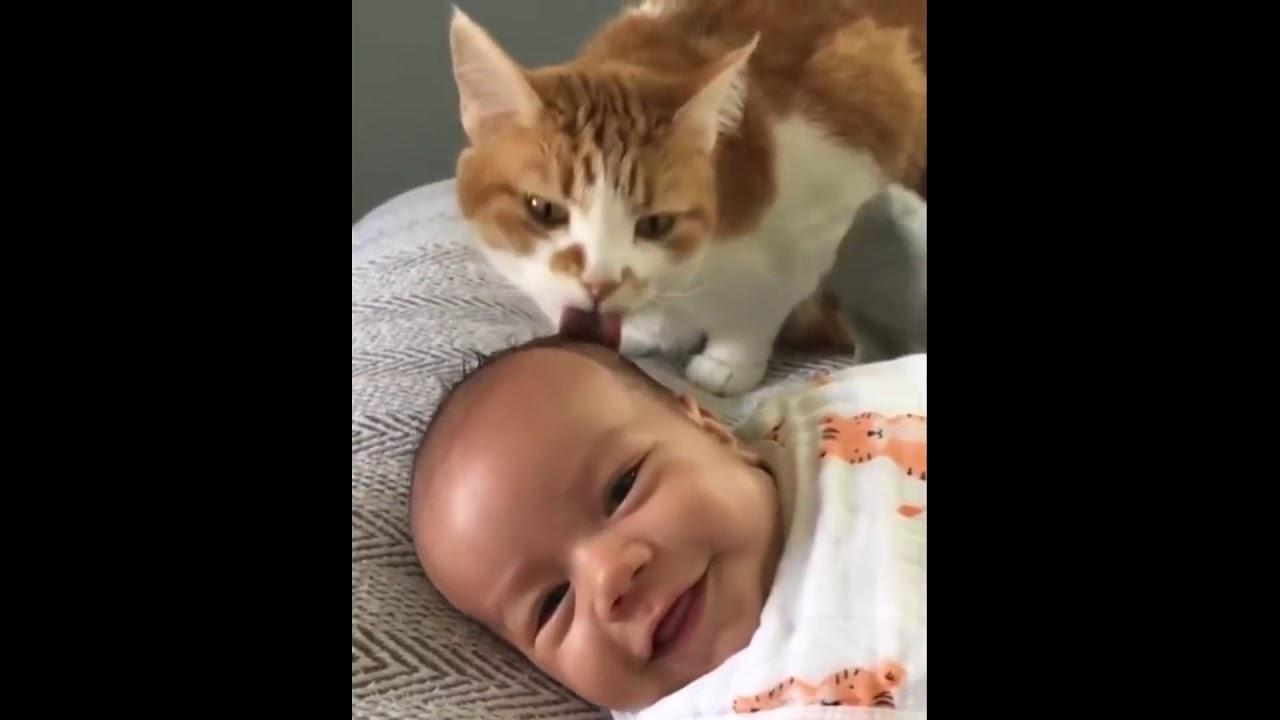 Смешные коты и котики, приколы про котов до слез - Смешные кошки МатроскинТВ 2019