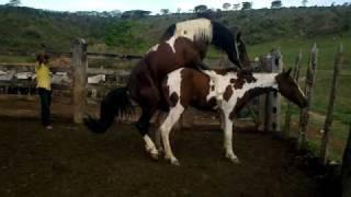 Repeat youtube video Cobertura cavalos pampa-Haras J.PIRES