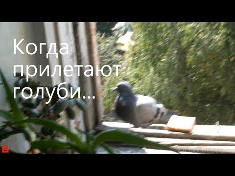 Когда прилетают голуби...