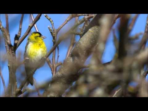 Kevadel (Juba linnukesed)