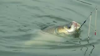 Good Catla Fishing Videos By Fish Watching