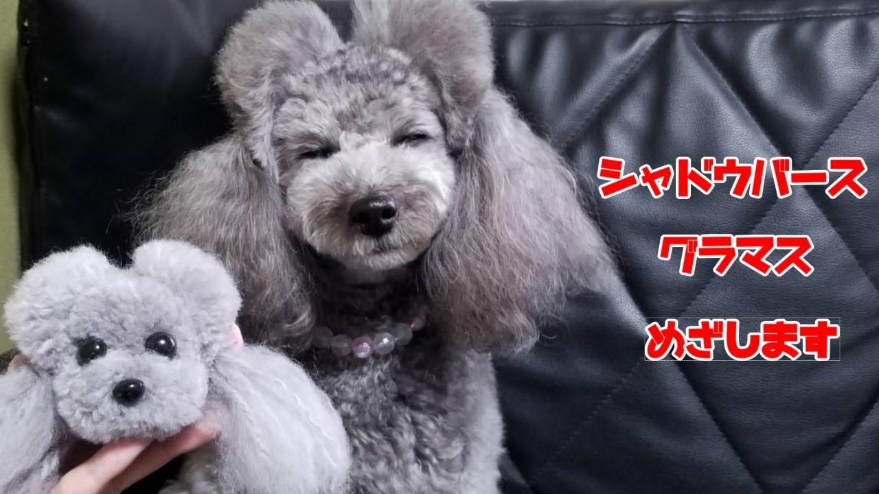 グラマス目指すMR9000~