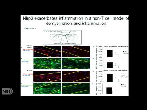 The Broad Impact of NLRs on Immunity and Beyond